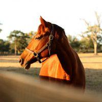horse-532871_960_720