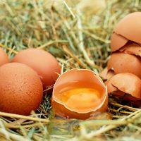 guida-al-codice-delle-uova-1